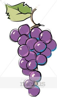 Concord Grapes Clipart Wine Clipart