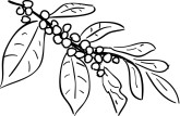 Coffee Plant Clip Art