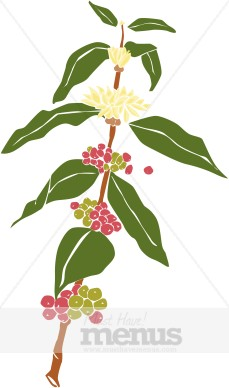 Coffee Plant Clipart   Coffee Clipart