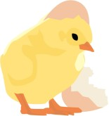 Chick Hatching Clipart