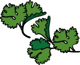 Parsley Sprigs Clipart