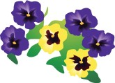 Pansies Clipart