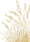 Fall Wheat Clipart