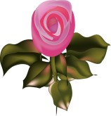 Silk Rose Clipart