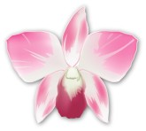Pink Orchid Clip Art