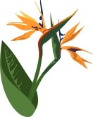 Birds of Paradise Clipart