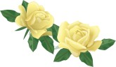 Two Pale Yellow Rose Flowers