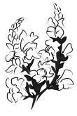 Snapdragon Blossom Clipart