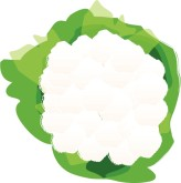 Cauliflower Clipart