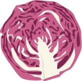 Red Cabbage Clipart