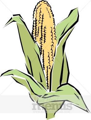 Corn Clip Art   Vegetable Clipart