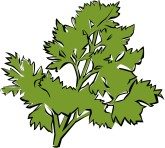 Parsley Clip Art