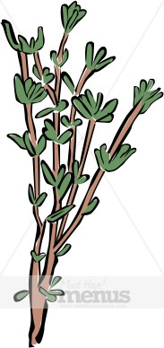 Thyme Clipart | Herbs Clipart
